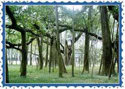 Botanical Gardens Calcutta